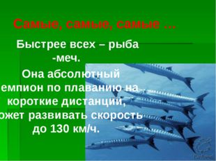 Самые, самые, самые … Быстрее всех – рыба -меч. Она абсолютный чемпион по пла