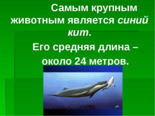 Самым крупным животным является синий кит. Его средняя длина – около 24 метр