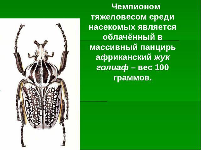 Чемпионом тяжеловесом среди насекомых является облачённый в массивный панцир...