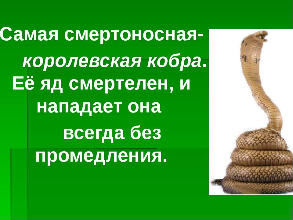 Самая смертоносная- королевская кобра. Её яд смертелен, и нападает она всегда...