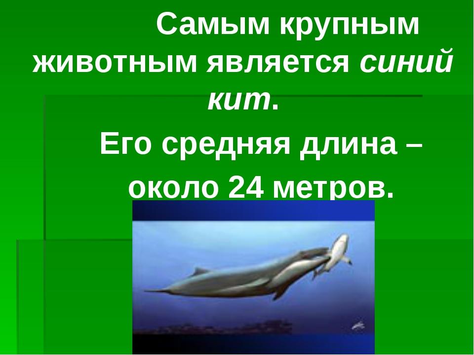 Самым крупным животным является синий кит. Его средняя длина – около 24 метр...