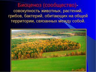 Биоценоз (сообщество)- совокупность животных, растений, грибов, бактерий, оби