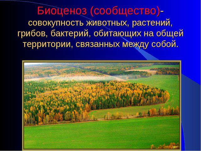 Биоценоз (сообщество)- совокупность животных, растений, грибов, бактерий, оби...