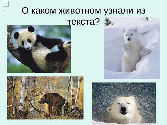 О каком животном узнали из текста?