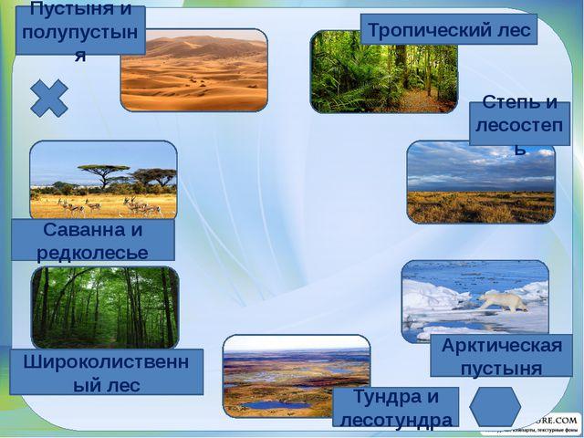 Тропический лес Степь и лесостепь Арктическая пустыня Тундра и лесотундра Ши...