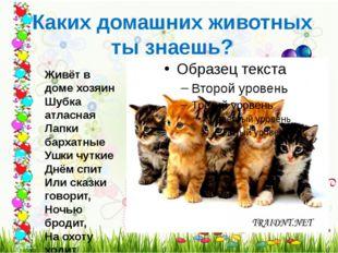 Каких домашних животных ты знаешь? Живёт в доме хозяин Шубка атласная Лапки б