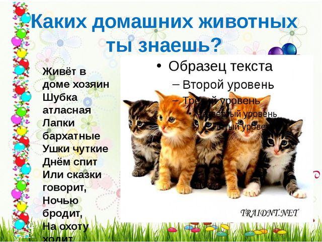 Каких домашних животных ты знаешь? Живёт в доме хозяин Шубка атласная Лапки б...