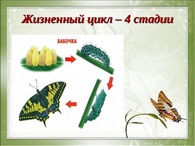 Жизненный цикл – 4 стадии