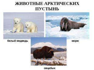 ЖИВОТНЫЕ АРКТИЧЕСКИХ ПУСТЫНЬ белый медведь морж овцебык