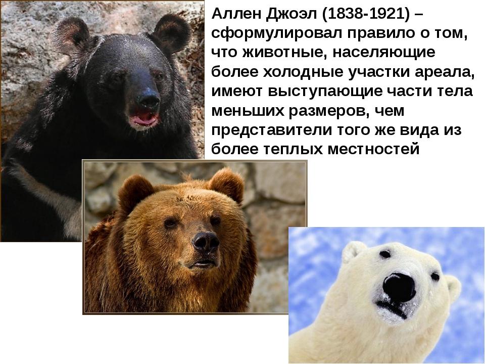 Аллен Джоэл (1838-1921) –сформулировал правило о том, что животные, населяющи...