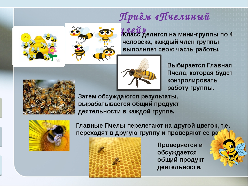 Приём «Пчелиный улей» Класс делится на мини-группы по 4 человека, каждый чле...