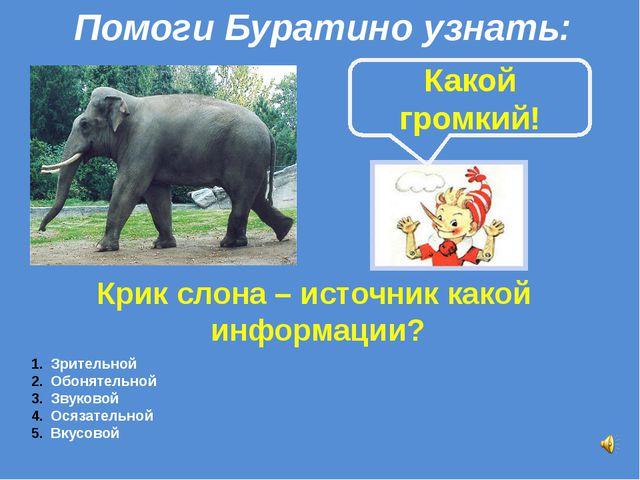 Крик слона – источник какой информации? Какой громкий! Зрительной Обонятельно...