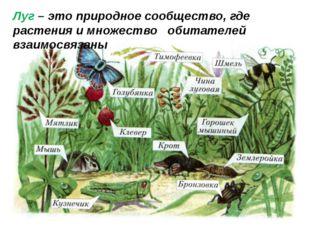 Луг – это природное сообщество, где растения и множество обитателей взаимосвя