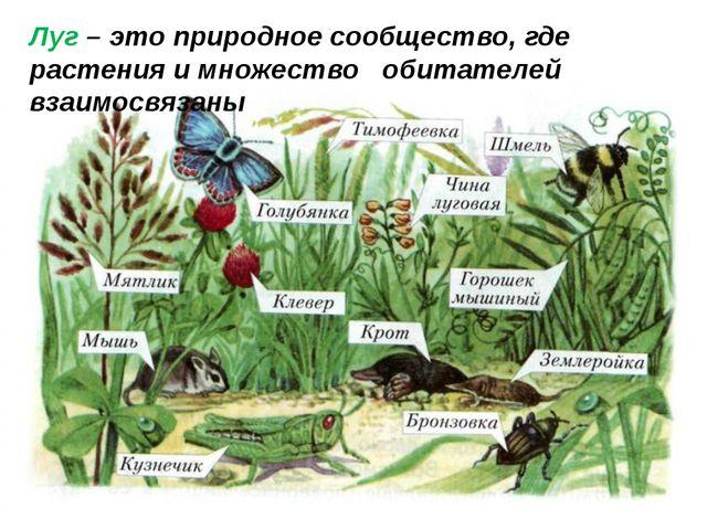 Луг – это природное сообщество, где растения и множество обитателей взаимосвя...