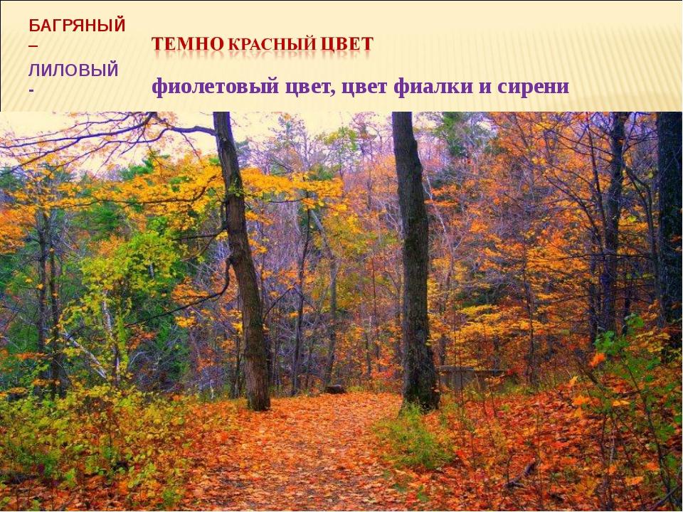 БАГРЯНЫЙ – ЛИЛОВЫЙ - фиолетовый цвет, цвет фиалки и сирени