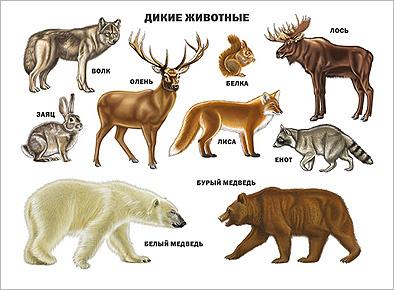 http://prof-press.ru/assets/images/karton/Plakaty/Dikie%20jivotnye.jpg