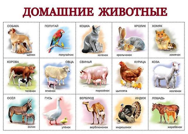 http://static.baza.farpost.ru/v/1337999930105_bulletin