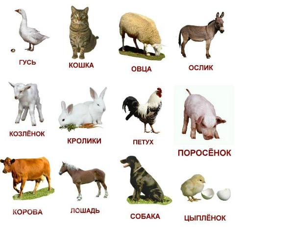 http://www.kinderhouse.ru/uploads/posts/2014-09/1411116413_392d0f2e44e469cae25188137c03d997.jpg