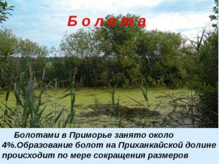 Б о л о т а Болотами в Приморье занято около 4%.Образование болот на Приханк