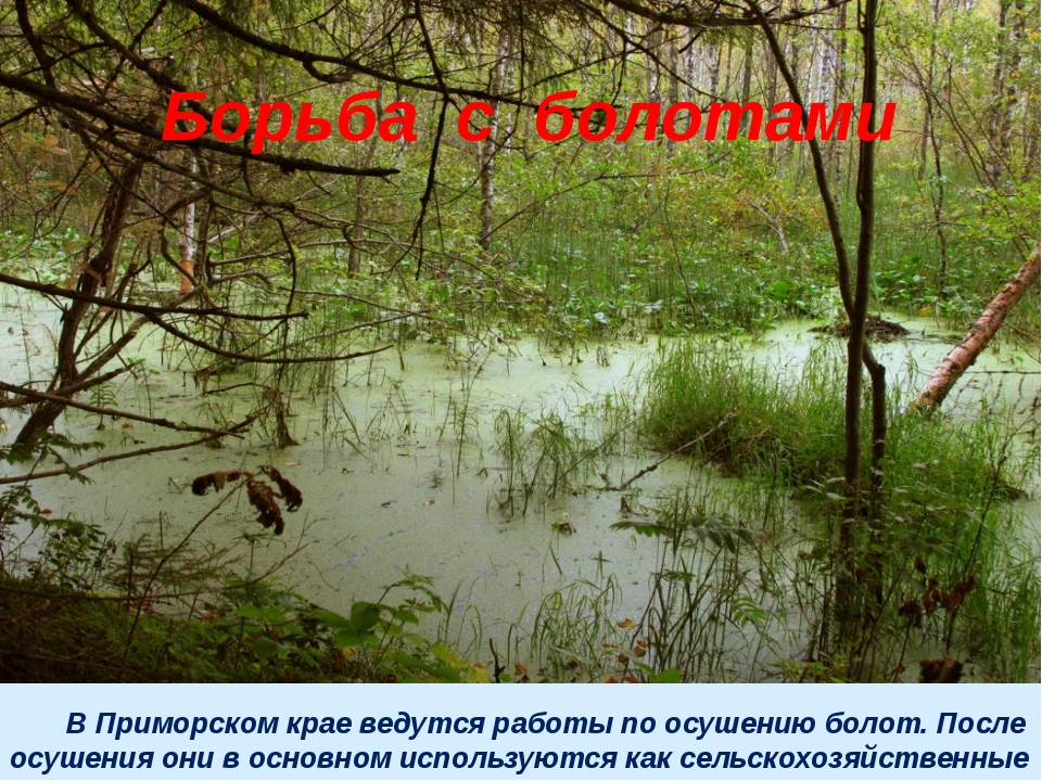 В Приморском крае ведутся работы по осушению болот. После осушения они в осн...