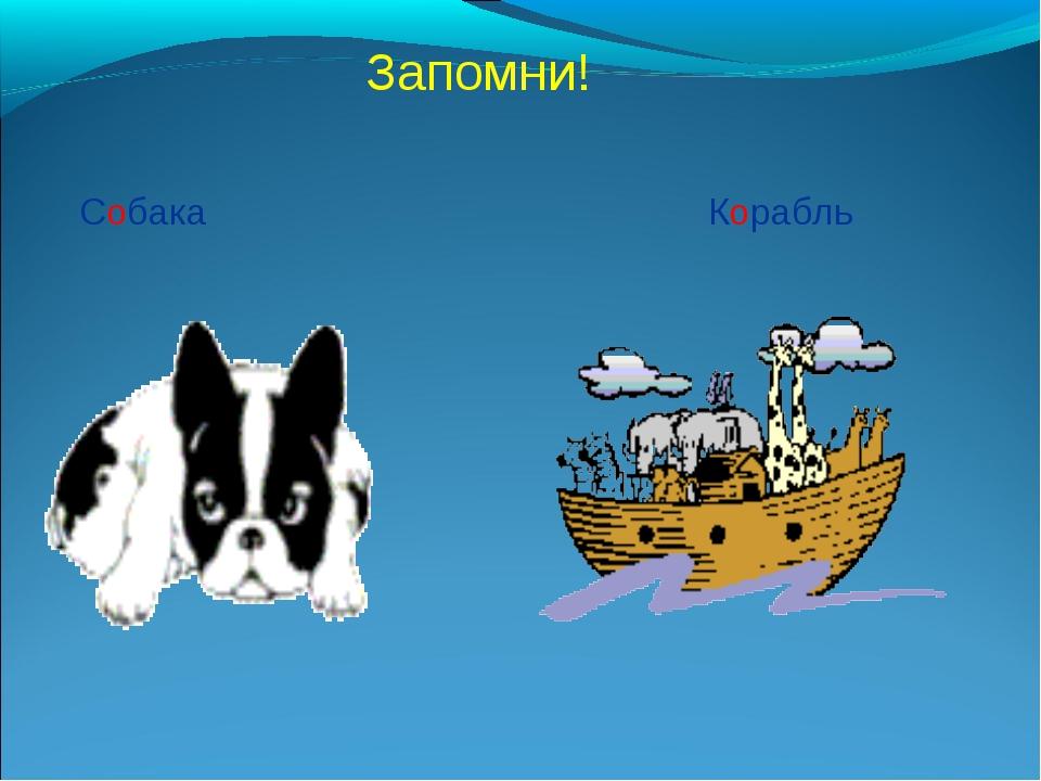 Запомни! Собака Корабль