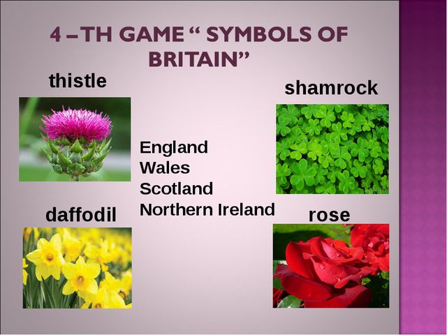 England Wales Scotland NorthernIreland thistle shamrock rose daffodil