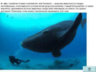 9 - кит. Синий кит(такжеголубой кит, илиблювал)— морское животное из отря