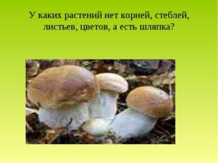 У каких растений нет корней, стеблей, листьев, цветов, а есть шляпка?