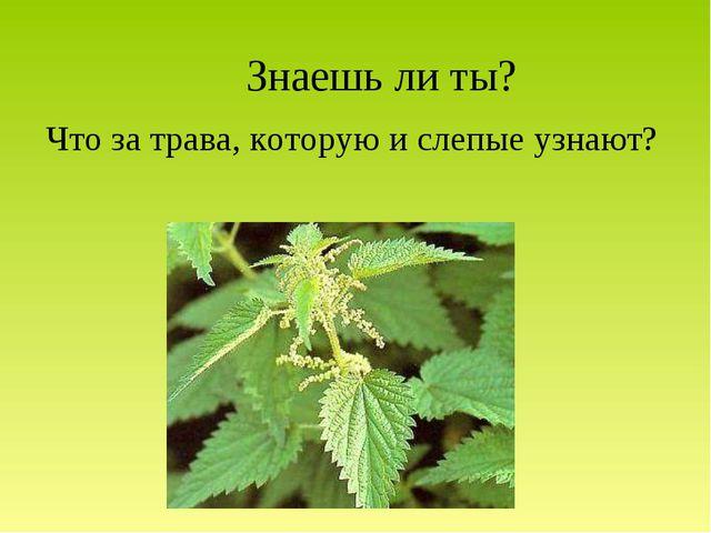 Знаешь ли ты? Что за трава, которую и слепые узнают?