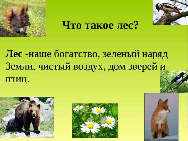 Что такое лес? Лес -наше богатство, зеленый наряд Земли, чистый воздух, дом з...