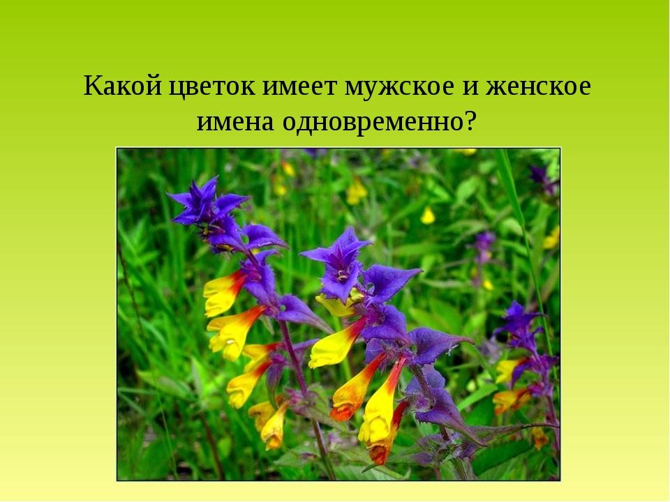Какой цветок имеет мужское и женское имена одновременно?