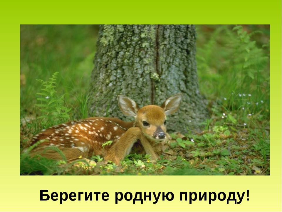 Берегите родную природу!