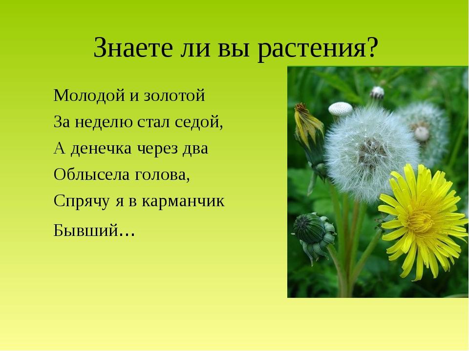 Знаете ли вы растения? Молодой и золотой За неделю стал седой, А денечка чере...