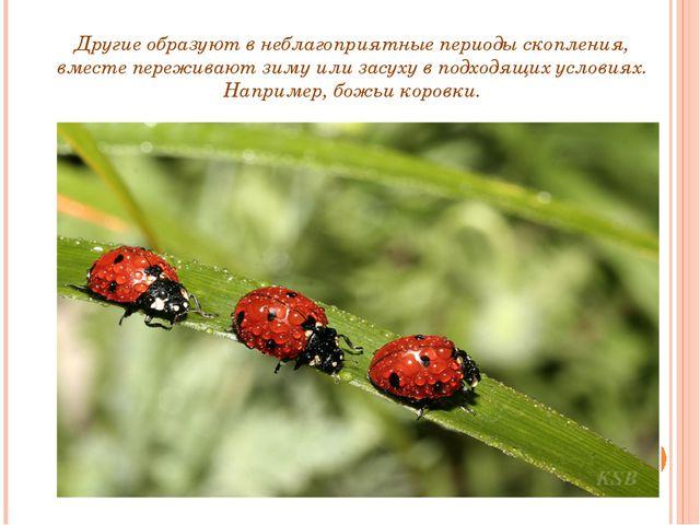 Другие образуют в неблагоприятные периоды скопления, вместе переживают зиму и...