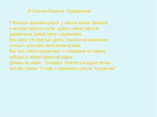 И.Соколов-Микитов «Одуванчики» У больших проезжих дорог, у лесных малых троп