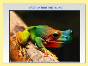 Радужная лягушка