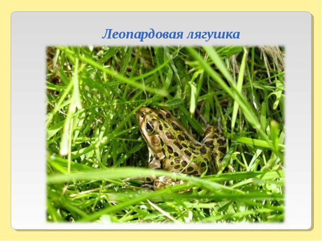 Леопардовая лягушка