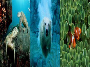 В 40-е гг. XX в. был изобретен акваланг. Два баллона на спине, маска и ласты