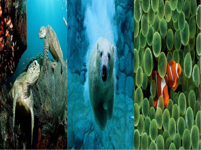 В 40-е гг. XX в. был изобретен акваланг. Два баллона на спине, маска и ласты...