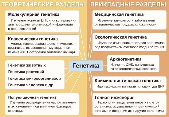 01_razdely_genetiki.jpg