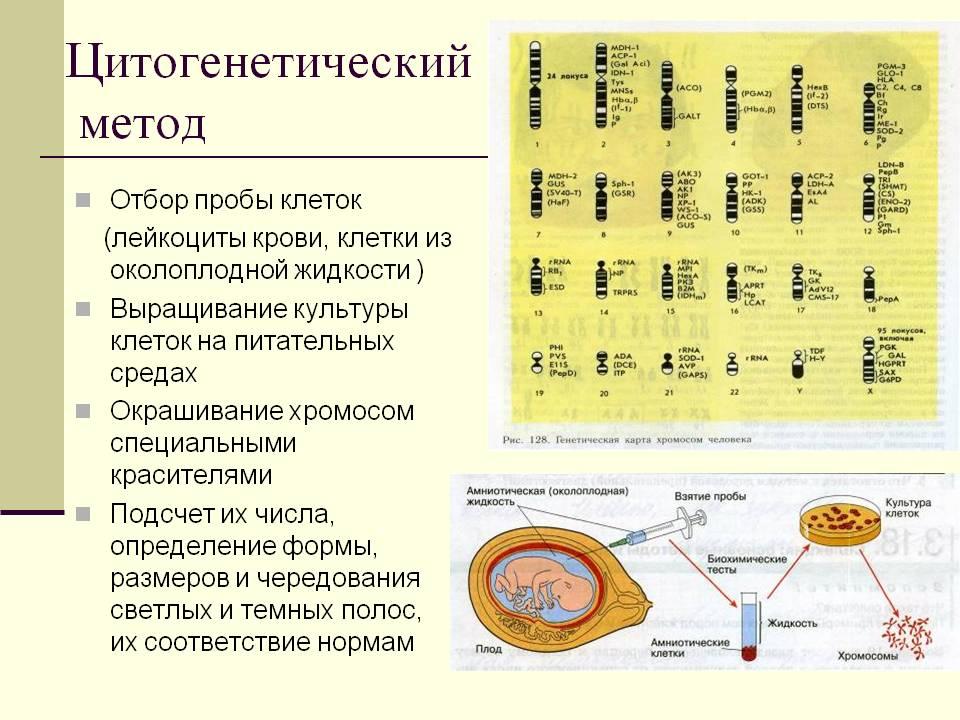 http://900igr.net/datas/meditsina/Genetika-i-nasledstvennye-bolezni-cheloveka/0012-012-TSitogeneticheskij-metod.jpg