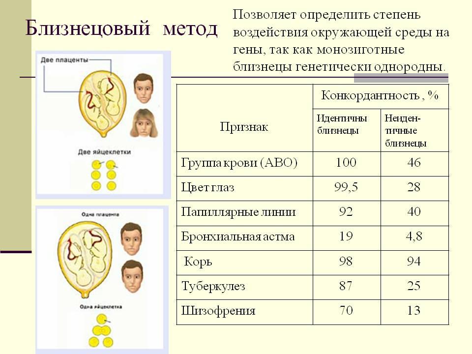 http://v.900igr.net:10/datas/meditsina/Genetika-i-nasledstvennye-bolezni-cheloveka/0010-010-Bliznetsovyj-metod.jpg
