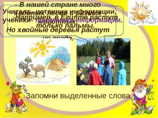 - В нашей стране много хвойных лесов и разных животных. Но хвойные деревья ра