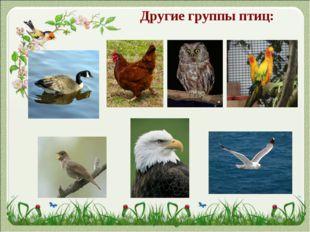Другие группы птиц: