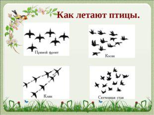 Как летают птицы.