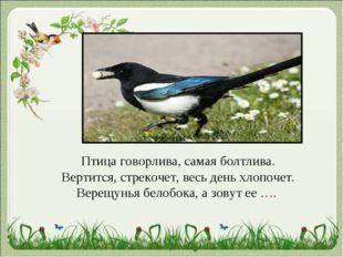 Птица говорлива, самая болтлива. Вертится, стрекочет, весь день хлопочет. Вер