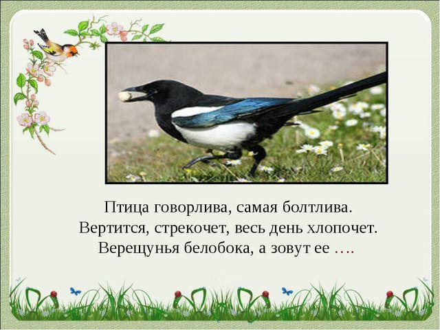 Птица говорлива, самая болтлива. Вертится, стрекочет, весь день хлопочет. Вер...