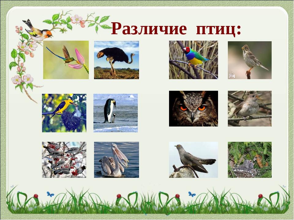 Различие птиц: