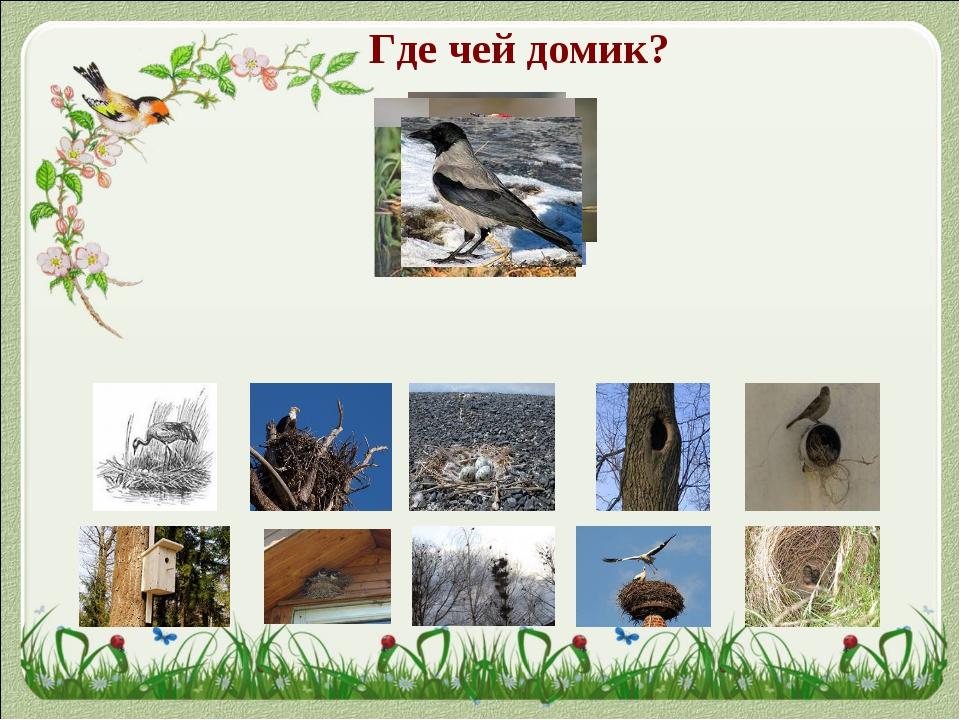 Картинки с изображением аистов в гнезде слабость можно