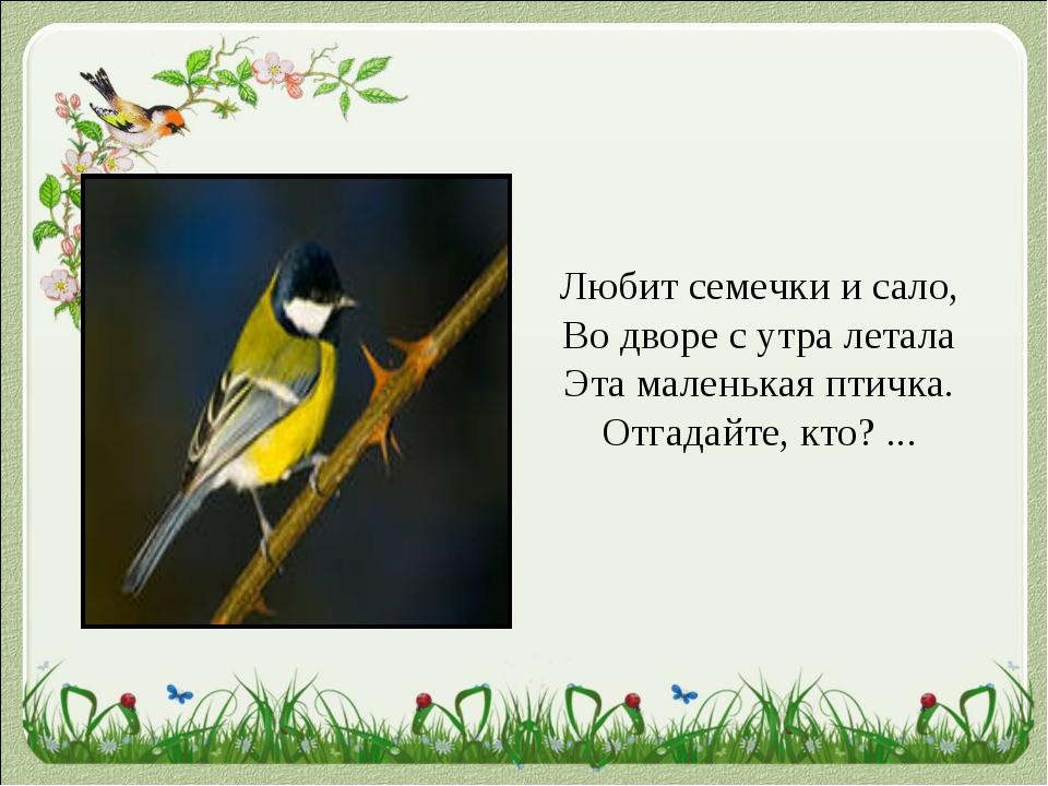 Любит семечки и сало, Во дворе с утра летала Эта маленькая птичка. Отгадайте,...